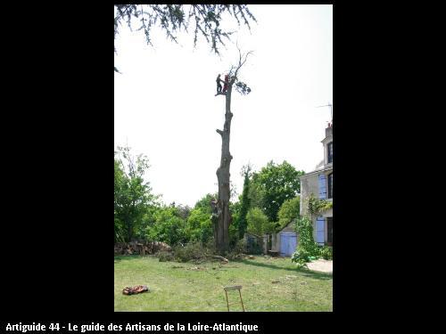 Elagage réalisé par l'entreprise Brière Environnement basé à LA CHAPELLE DES MARAIS