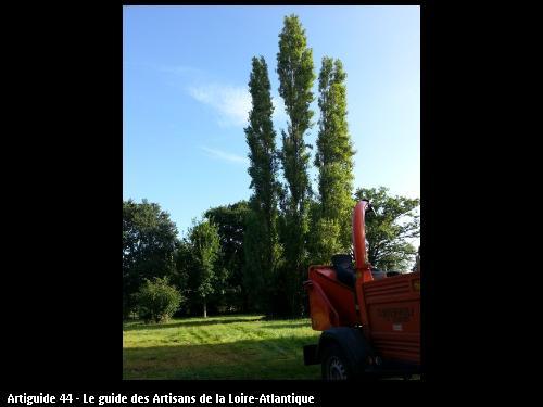 Travaux sur un peuplier réalisés par l'entreprise Brière Environnement basé à LA CHAPELLE DES MARAIS